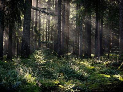 Licht_im_Schwarzwald