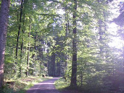 Wandern in Schwarzwaldluft